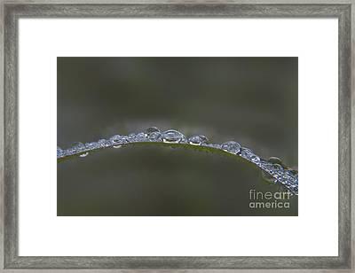 Morning Raindrops On Wild Grass Framed Print by Darleen Stry