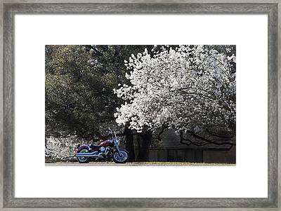 Morning Ride Framed Print by Janet Oh