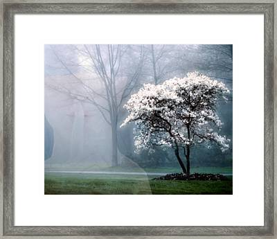Morning Stillness Framed Print by Richard Stevens