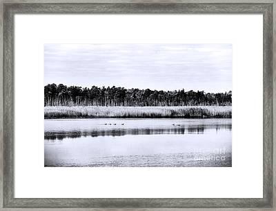 Morning Swim Framed Print by John Rizzuto