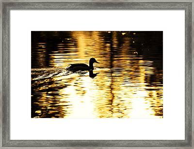 Morning Swim Framed Print by Rick Berk