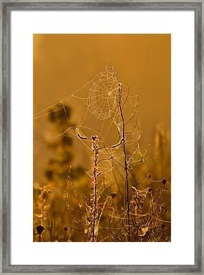 Morning Web Framed Print by Joshua McCullough