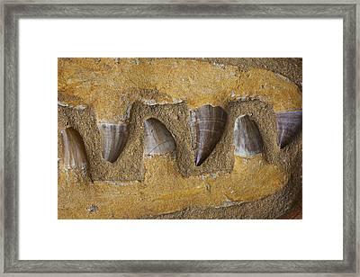 Mosasauras Teeth Framed Print by Garry Gay