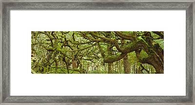 Moss-covered Trees Framed Print by David Nunuk