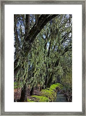 Moss Covered Trees Framed Print by Garry Gay