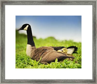 Mother Goose And The Loud One Framed Print by Vicki Jauron