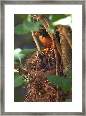 Mothering Framed Print by Joann Vitali