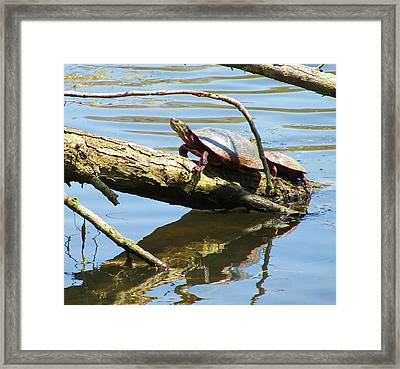 Mother's Day Framed Print by Todd Sherlock