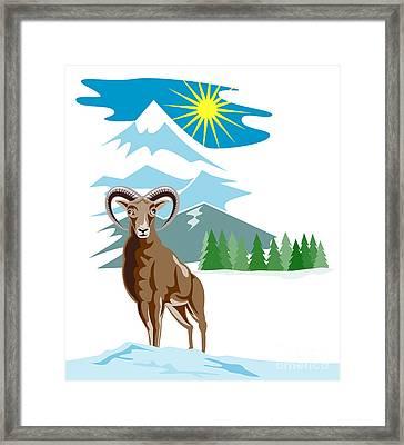 Mouflon Sheep Mountain Goat Framed Print by Aloysius Patrimonio