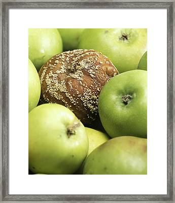Mouldy Apple Framed Print by Sheila Terry