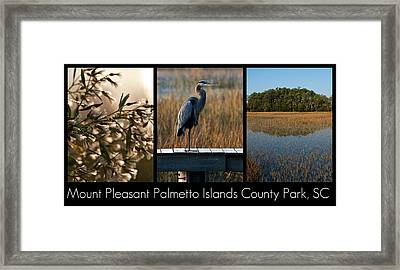Mount Pleasant Palmetto Islands County Park  Framed Print by Melissa Wyatt