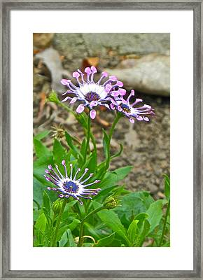 Mountain Floral Framed Print by Eve Spring