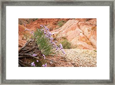 Mountain Flowers Framed Print by Konstantin Dikovsky