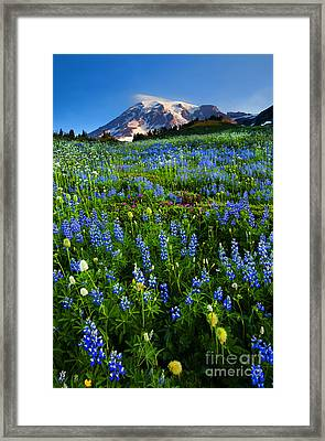 Mountain Garden Framed Print by Mike  Dawson