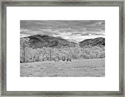 Mountain Grazing Framed Print by Joann Vitali