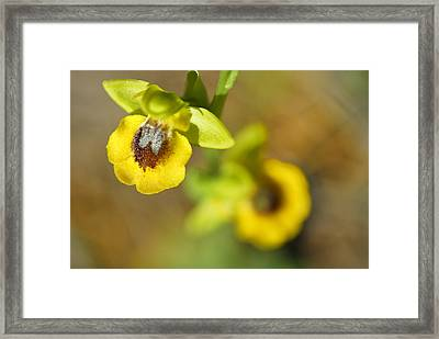 Mountain Orchids Framed Print by Guido Montanes Castillo