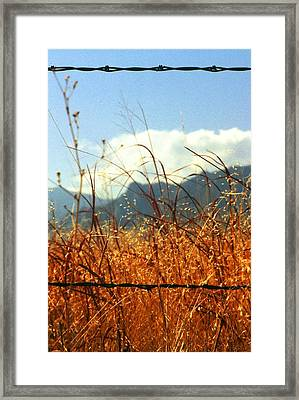 Mountain Wheat With Barbwire Framed Print by Jaye Crist
