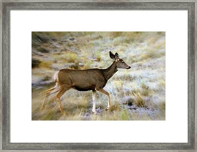 Mule Deer On The Move Framed Print by Marty Koch