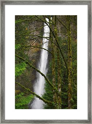 Multnomah Falls Framed Print by R Lynley