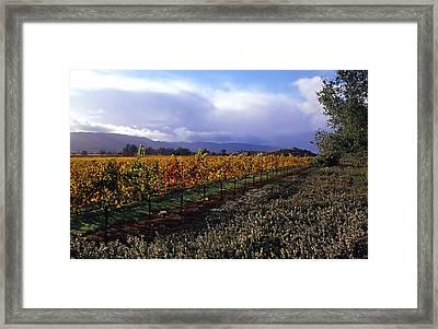 Mumm Napa Vineyard Framed Print by Richard Leon