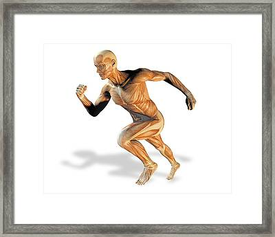 Muscular System Framed Print by Victor Habbick Visions