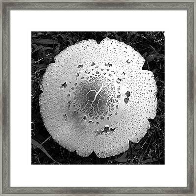 Mushroom Framed Print by Brett Winn