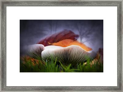 Mushrooms Close Up Framed Print by Svetlana Sewell