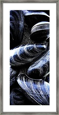 Mussels Framed Print by Meirion Matthias
