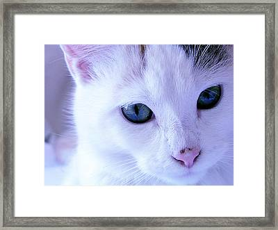 My Blue Cat Framed Print by Guadalupe Nicole Barrionuevo