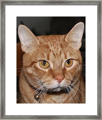 My Cat Cano Framed Print by Lorenzo Muriedas