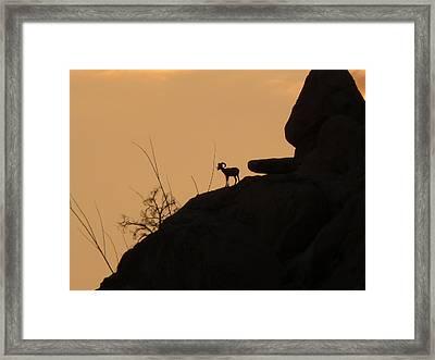 My Friend At Sunset I Framed Print by Carolina Liechtenstein