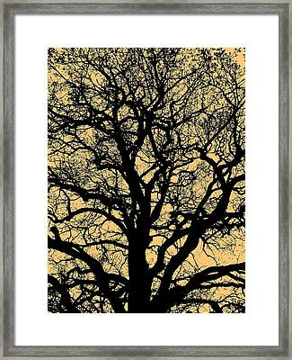 My Friend - The Tree ... Framed Print by Juergen Weiss