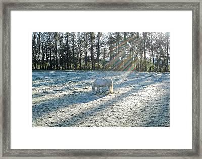 My Lovely Horse Framed Print by Anthony Beyga