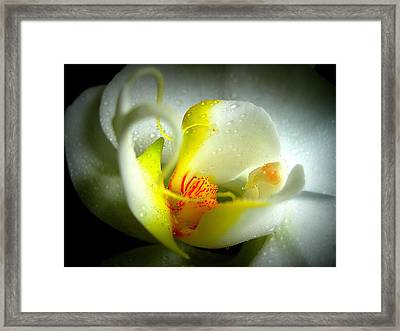 My True Self Framed Print by Shirley Sirois
