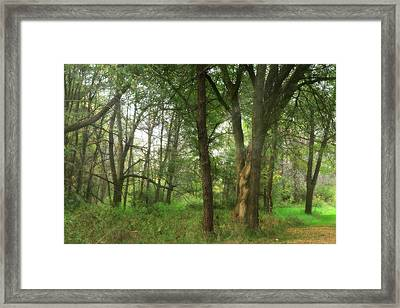 Mystic Forest Framed Print by Scott Hovind