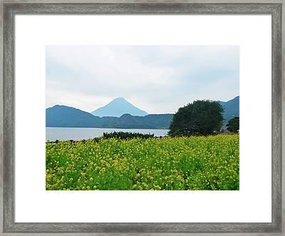 Nanohana (rape Blossoms) Framed Print by Kurosaki San