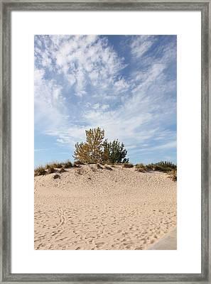 Nantucket Framed Print by Sheryl Burns