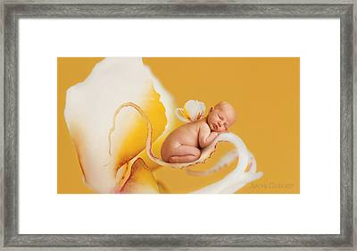 Nate In Moth Orchid Framed Print by Anne Geddes