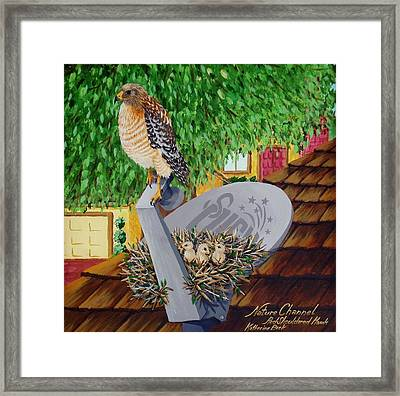 Nature Channel- Red Shouldered Hawk Framed Print by Katherine Young-Beck