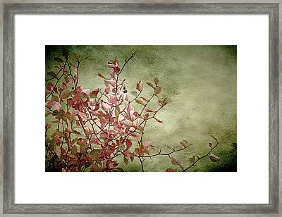 Nature On Parade Framed Print by Bonnie Bruno