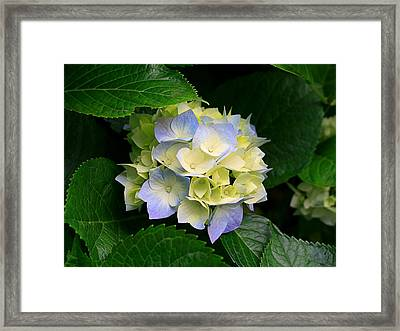 Nature1 Framed Print by Dhirendra  Jaiswal