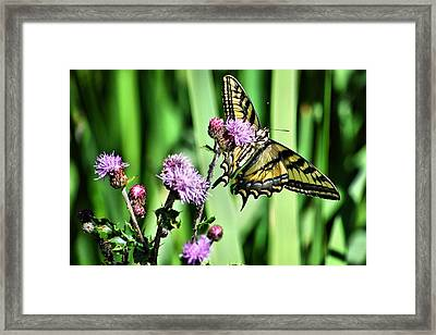 Natures Beauty Framed Print by Don Mann