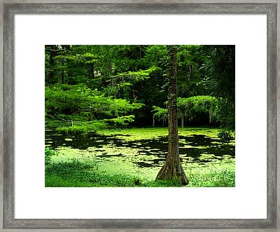 Natures Beauty Framed Print by WolfHeart Photography