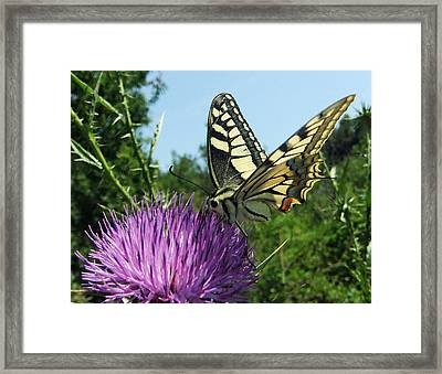 Natures Music  Framed Print by Eric Kempson