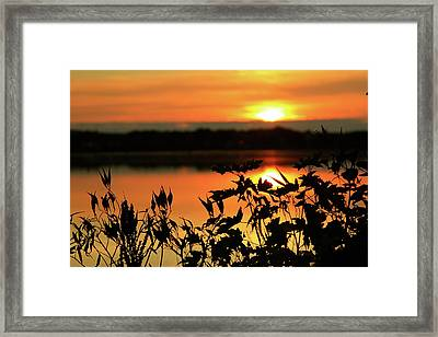 Nature's Paintbrush Framed Print by Mike Stouffer