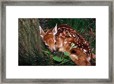 Nature's Precious Creation Framed Print by Skip Willits