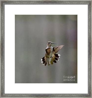Nectar Defense Framed Print by Cris Hayes