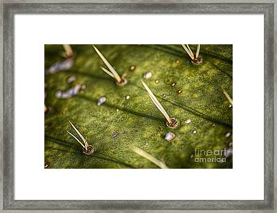 Needle Shadows Framed Print by Jeremy Linot