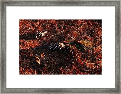Needles Cones And Oak Leaf Framed Print by Larry Ricker