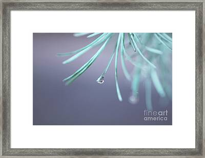 Neigerelle - 01a Framed Print by Variance Collections